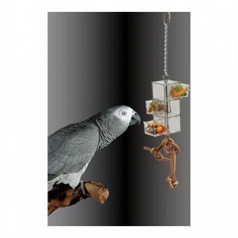 Der Graupapagei Ein Sprachbegabter Und Intelligenter Vogel