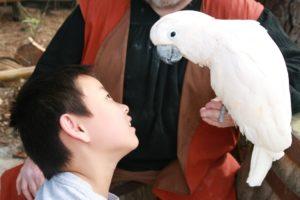 parrot-177393_1920