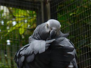 parrot-406880_1280