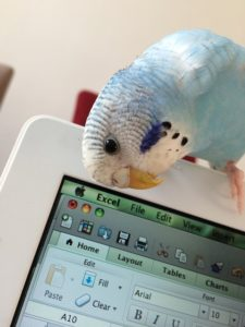 parrot-812341_640